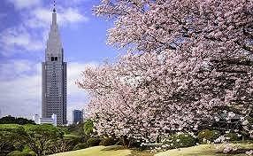 ダウ御苑桜5242ンロード